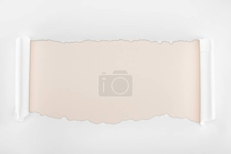 Photo for Ripped white textured paper with curl edges on ivory background - Royalty Free Image