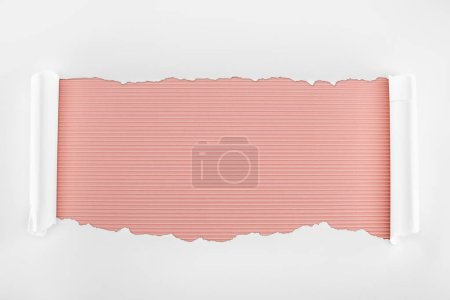 Photo for Ripped white textured paper with curl edges on pink striped background - Royalty Free Image