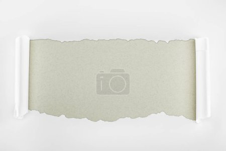 Photo for Ripped white textured paper with curl edges on grey background - Royalty Free Image