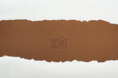 Photo pour Papier blanc déchiqueté avec bords bouclés sur fond brun - image libre de droit