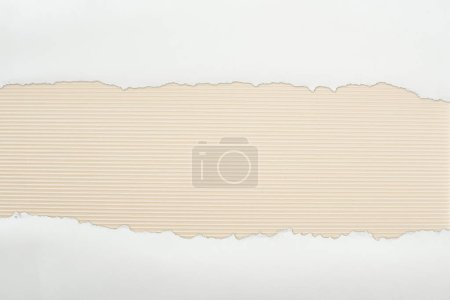 Photo for Ripped white textured paper with copy space on ivory striped background - Royalty Free Image