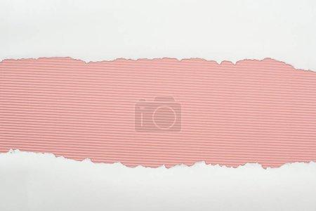 Photo pour Papier texturé blanc déchiré avec espace de copie sur fond rayé rose - image libre de droit