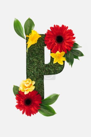top view of cut out P letter on green grass background with red gerberas, green leaves and daffodils isolated on white