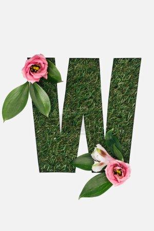 vue du dessus de la lettre W découpée sur fond d'herbe verte avec des feuilles et des pivoines roses isolées sur blanc