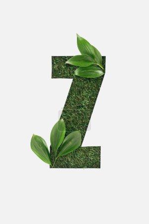 Foto de Vista superior de corte letra Z sobre fondo verde hierba con hojas aisladas en blanco - Imagen libre de derechos