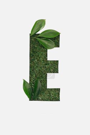 Foto de Vista superior de corte letra E sobre fondo verde hierba con hojas aisladas en blanco - Imagen libre de derechos