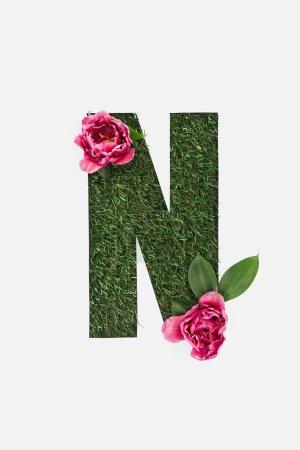 vue du haut de la lettre N découpée sur fond d'herbe verte avec des feuilles et des pivoines roses isolées sur fond blanc
