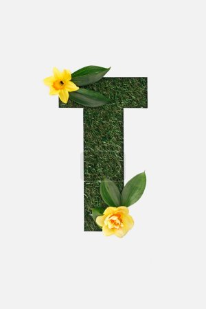 top view of cut out T letter on green grass background with leaves and yellow daffodils isolated on white