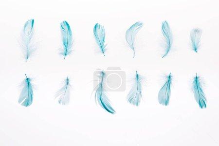 Foto de Conjunto de plumas azules suaves aisladas en blanco - Imagen libre de derechos