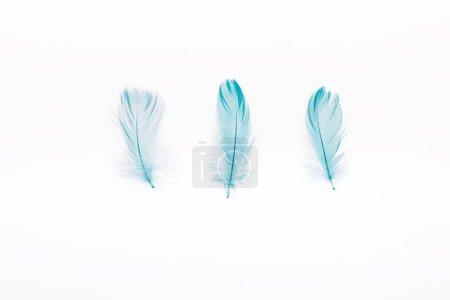 Photo pour Bleu doux trois plumes d'isolement sur le blanc - image libre de droit