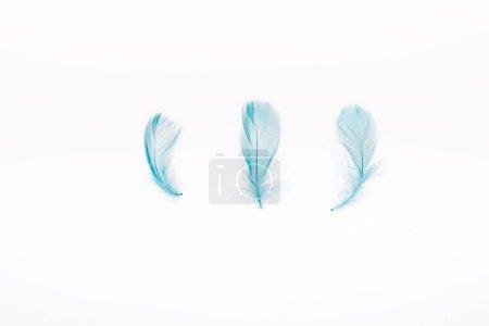 Foto de Azul ligero y suave tres plumas aisladas en blanco - Imagen libre de derechos