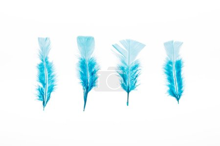 Photo for Row of blue lightweight four feathers isolated on white - Royalty Free Image