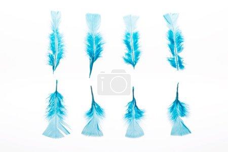 Foto de Hileras de plumas azules ligeras y brillantes aisladas en blanco - Imagen libre de derechos