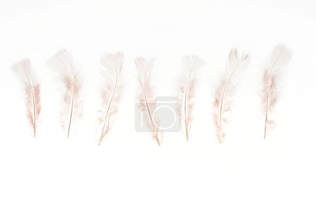 Photo for Row of beige lightweight feathers isolated on white - Royalty Free Image