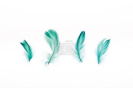 Foto de Verde ligero cuatro plumas aisladas en blanco - Imagen libre de derechos