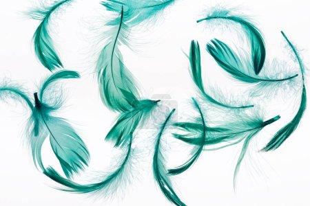 Foto de Fondo transparente con plumas verdes ligeras y suaves aisladas en blanco - Imagen libre de derechos