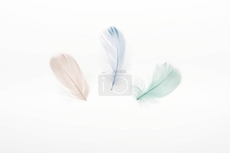 Photo for Multicolored light beige, green and blue feathers isolated on white - Royalty Free Image
