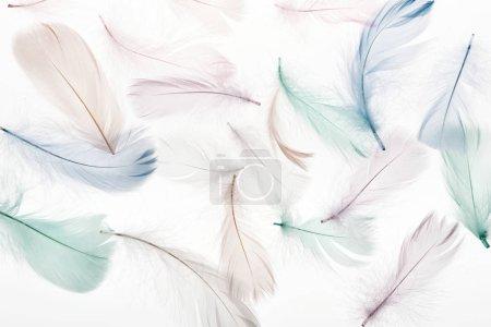 Foto de Fondo sin costuras con esponjosas plumas de color beige claro, verde y azul aisladas en blanco - Imagen libre de derechos