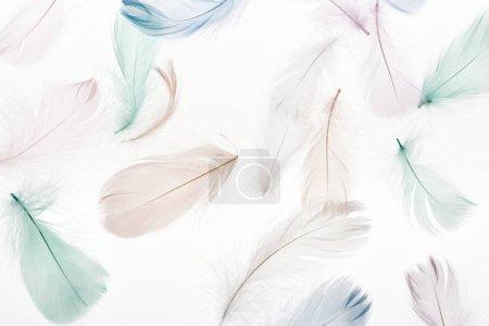 Photo pour Fond sans couture avec des plumes beige clair doux, vert et bleu isolé sur blanc - image libre de droit