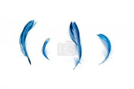 Foto de Azul brillante ligero cuatro plumas aisladas en blanco - Imagen libre de derechos