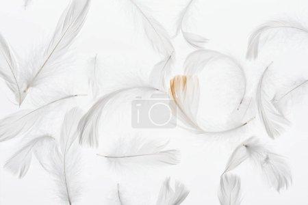 Photo pour Fond sans couture avec des plumes légères grises isolées sur blanc - image libre de droit