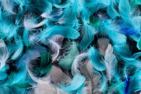 Photo for Seamless background with blue, green and turquoise soft feathers isolated on black - Royalty Free Image
