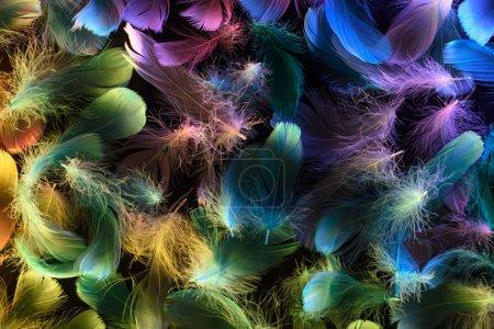 Foto de Fondo sin costuras de las plumas suaves multicolores de neón brillantes aisladas en negro - Imagen libre de derechos