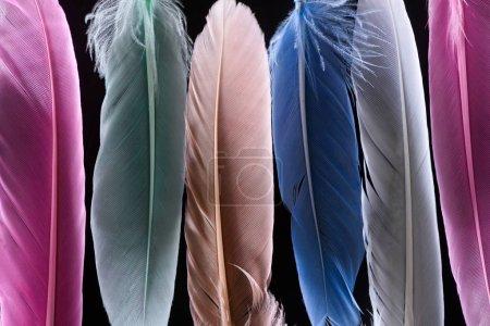 Photo pour Gros plan de plumes colorées douces et lumineuses en rangée isolées sur noir - image libre de droit
