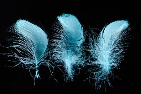 Foto de Hilera de plumas azules con textura brillante y ligeras aisladas en negro - Imagen libre de derechos