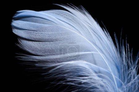 Photo pour Gros plan de plume texturée légère isolée sur noir - image libre de droit