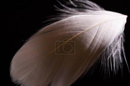 Photo pour Gros plan de plume légère beige et douce texturée isolée sur noir - image libre de droit