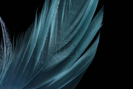 Photo for Close up of green lightweight textured feather isolated on black - Royalty Free Image
