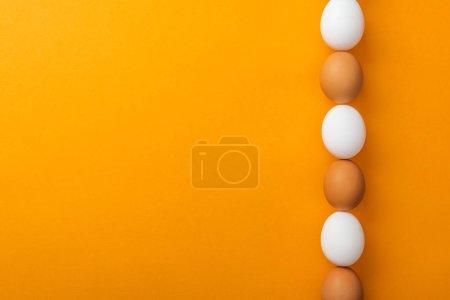 Photo pour Vue de dessus des oeufs de poulet organiques blancs et bruns dans la rangée sur le fond orange vif avec l'espace de copie - image libre de droit
