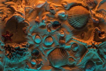 Photo pour Vue du haut des coquillages, des étoiles de mer, des pierres de mer et des coraux sur le sable avec des lumières oranges et bleues - image libre de droit