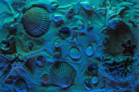 Photo pour Vue de dessus des coquillages, étoiles de mer, pierres de mer et coraux sur sable avec lumière bleue - image libre de droit