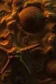 "Постер, картина, фотообои ""top view of seashells and big starfish on sand with orange light"""