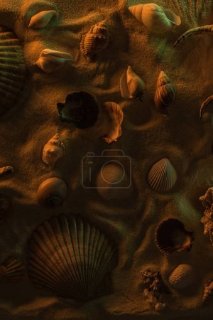 Photo for Top view of different seashells on sand with orange light - Royalty Free Image