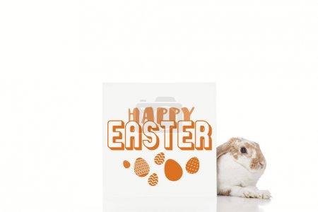 Photo pour Mignon lapin près de bord avec heureux Pâques et Pâques oeufs illustration isolé sur blanc - image libre de droit