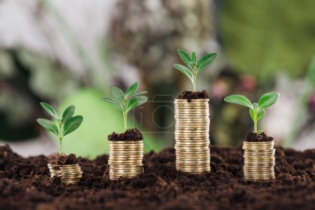 Photo pour Selective focus of arranged golden coins with green leaves and soil, financial growth concept - image libre de droit