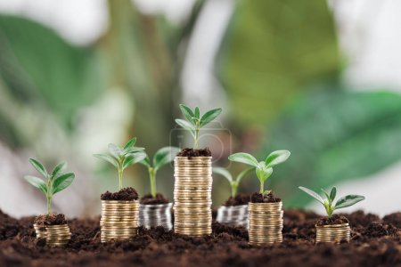 arranged coins with green leaves and soil, financial growth concept