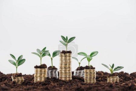 Photo pour Pièces de monnaie avec des feuilles vertes et le sol isolé sur le blanc avec l'espace de copie, concept de croissance financière - image libre de droit