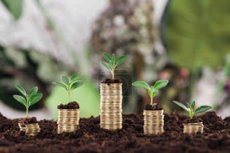 Photo pour Pièces d'or disposées avec des feuilles vertes et du sol, concept de croissance financière - image libre de droit