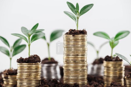 Photo pour Coins with green leaves and soil Isolated On White, financial growth concept - image libre de droit