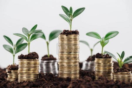 Photo pour Golden coins with green leaves and soil Isolated On White, financial growth concept - image libre de droit
