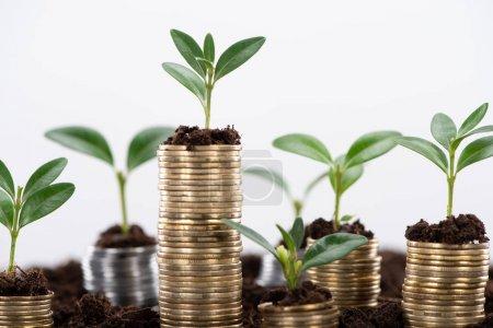 Foto de Monedas de oro con hojas verdes y suelo aislado en blanco, concepto de crecimiento financiero - Imagen libre de derechos