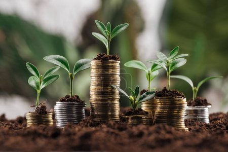 Photo for Silver and golden coins with green leaves and soil, financial growth concept - Royalty Free Image
