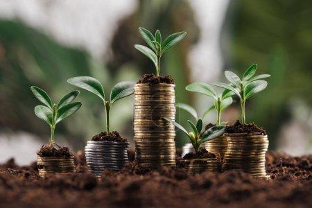 Photo pour Pièces d'argent et d'or avec sol et feuilles vertes, concept de croissance financière - image libre de droit