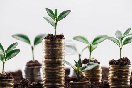Photo pour Focus sélectif des pièces de monnaie avec des feuilles vertes et le sol isolé sur le blanc, concept de croissance financière - image libre de droit