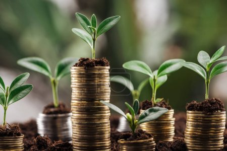 Photo for Coins with soil and green leaves, financial growth concept - Royalty Free Image