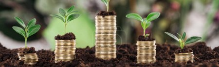 Photo for Panoramic shot of coins with green leaves and soil, financial growth concept - Royalty Free Image